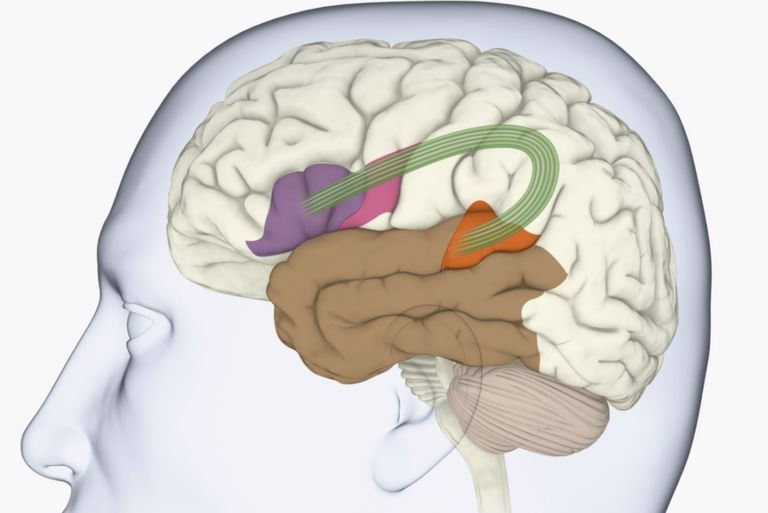 neurolinguistic pathways